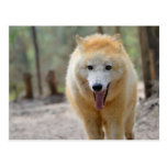 Retrato del lobo ártico tarjeta postal