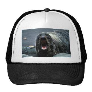 Retrato del lobo marino gorro