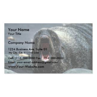 Retrato del lobo marino tarjetas de visita