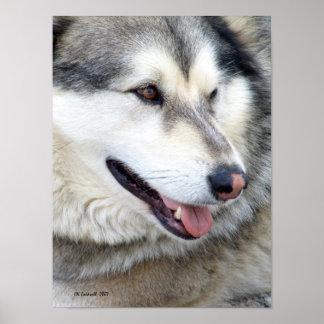 Retrato del lobo póster