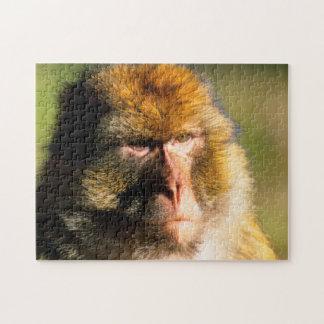 Retrato del Macaque de Barbary (Macaca Sylvanus) Puzzles