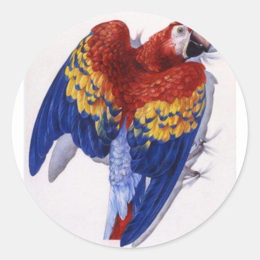 Retrato del Macaw del escarlata Pegatina Redonda