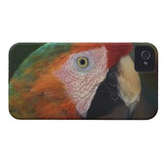 Retrato del Macaw iPhone 4 Cárcasa