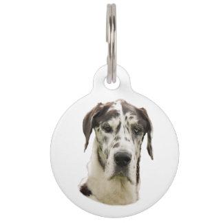 Retrato del mascota de great dane del Harlequin Placa Para Mascotas
