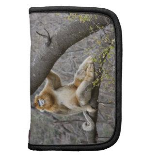 Retrato del mono de oro masculino en árbol organizador