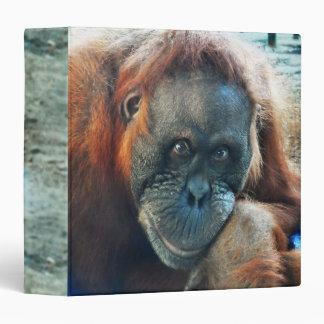 Retrato del orangután