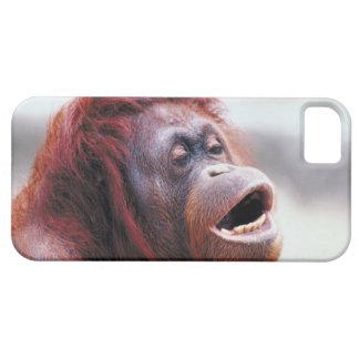 Retrato del orangután iPhone 5 funda