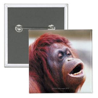 Retrato del orangután pin cuadrado