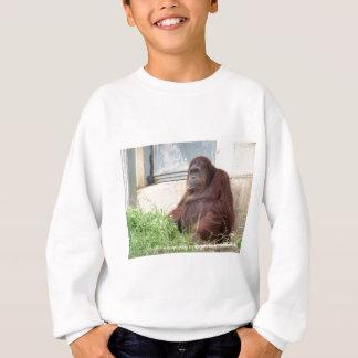 Retrato del orangután playera