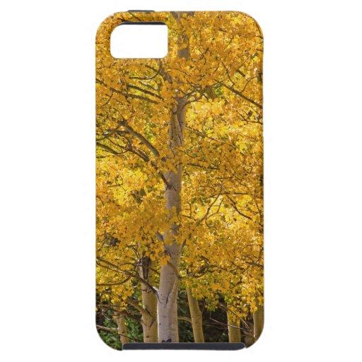 Retrato del oro de Aspen iPhone 5 Cárcasas