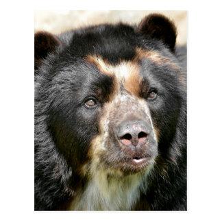 Retrato del oso andino postal
