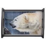 Retrato del oso polar bandejas