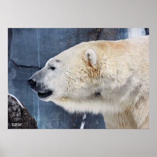 Retrato del oso polar poster