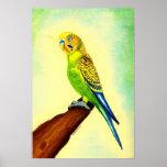 Retrato del pájaro de Budgie Póster