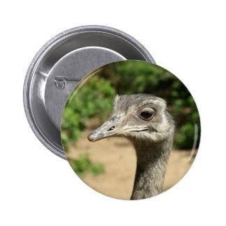 Retrato del pájaro de Rhea