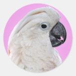Retrato del pájaro del Cockatoo Pegatina Redonda