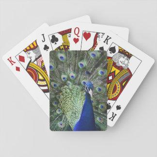 Retrato del pavo real con las plumas hacia fuera cartas de póquer