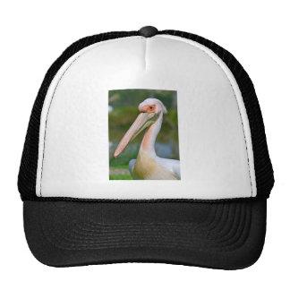 Retrato del pelícano blanco gorra