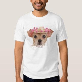 Retrato del pequeño perro en sombrero playera