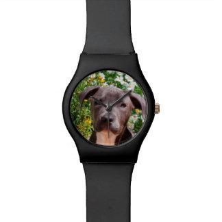 Retrato del perrito de Staffordshire bull terrier Relojes De Mano