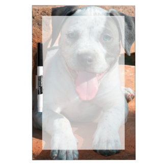 Retrato del perrito de Staffordshire Terrier Pizarra Blanca