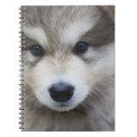 Retrato del perrito libro de apuntes con espiral