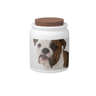 Retrato del perrito lindo del dogo plato para caramelo