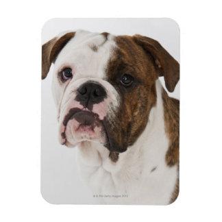 Retrato del perrito lindo del dogo imán flexible