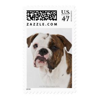 Retrato del perrito lindo del dogo sellos