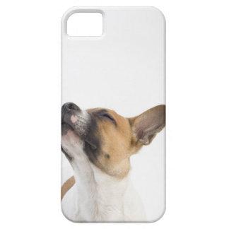retrato del perrito mestizo iPhone 5 fundas