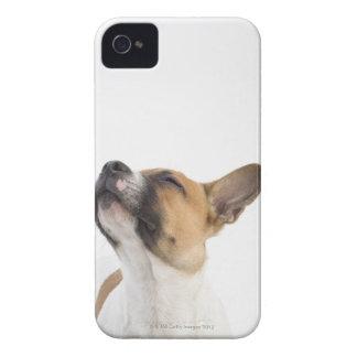 retrato del perrito mestizo iPhone 4 Case-Mate carcasas