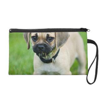 Retrato del perrito que se coloca en hierba