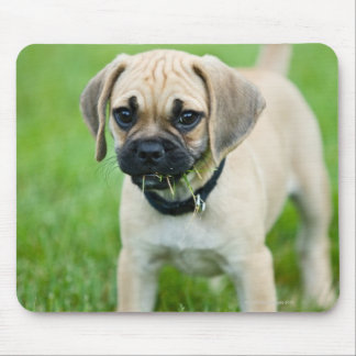 Retrato del perrito que se coloca en hierba alfombrilla de ratones