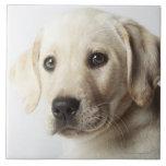 Retrato del perrito rubio del labrador retriever tejas  cerámicas