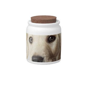 Retrato del perrito rubio del labrador retriever jarra para caramelo