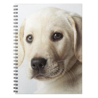 Retrato del perrito rubio del labrador retriever libro de apuntes