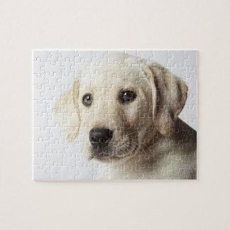 Retrato del perrito rubio del labrador retriever puzzle con fotos
