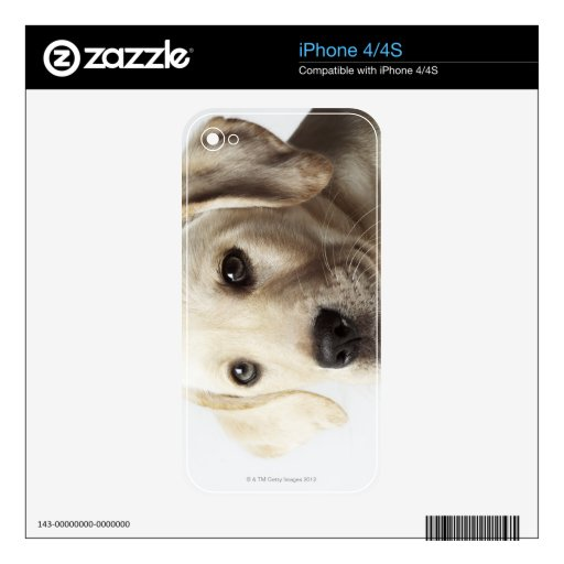 Retrato del perrito rubio del labrador retriever skins para iPhone 4S