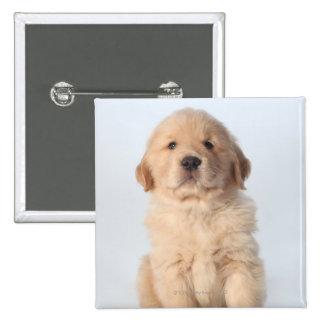 Retrato del perrito viejo de seis semanas del gold pin cuadrada 5 cm