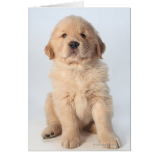 Retrato del perrito viejo de seis semanas del gold felicitacion
