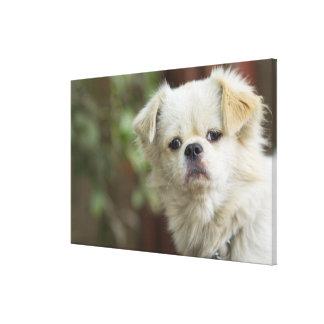 Retrato del perro 5 impresiones en lona