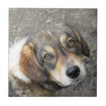 Retrato del perro azulejos cerámicos