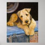 Retrato del perro de Airedale Terrier Poster