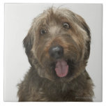 Retrato del perro de Briard Azulejo Cuadrado Grande