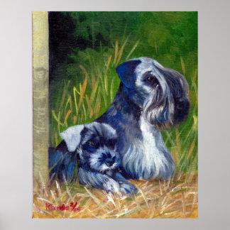 Retrato del perro de Cesky Terrier Póster