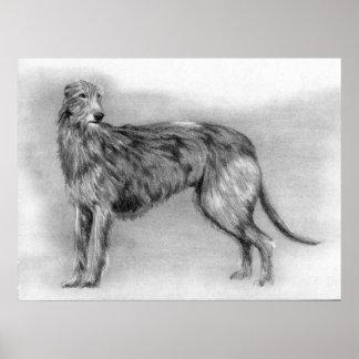 Retrato del perro de Deerhound del escocés Póster
