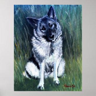 Retrato del perro de Elkhound del noruego Póster