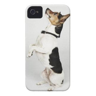 Retrato del perro de Jack Russell que se sienta Case-Mate iPhone 4 Carcasas