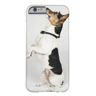 Retrato del perro de Jack Russell que se sienta Funda De iPhone 6 Barely There