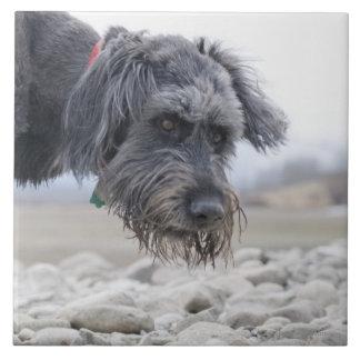 Retrato del perro de la raza de la mezcla incliná teja cerámica